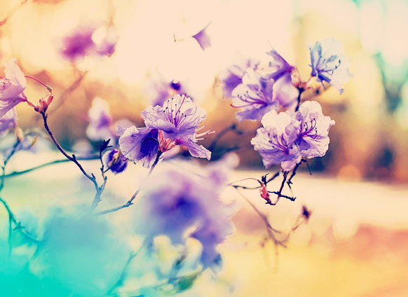 Photograph - 2018032959-spring.png